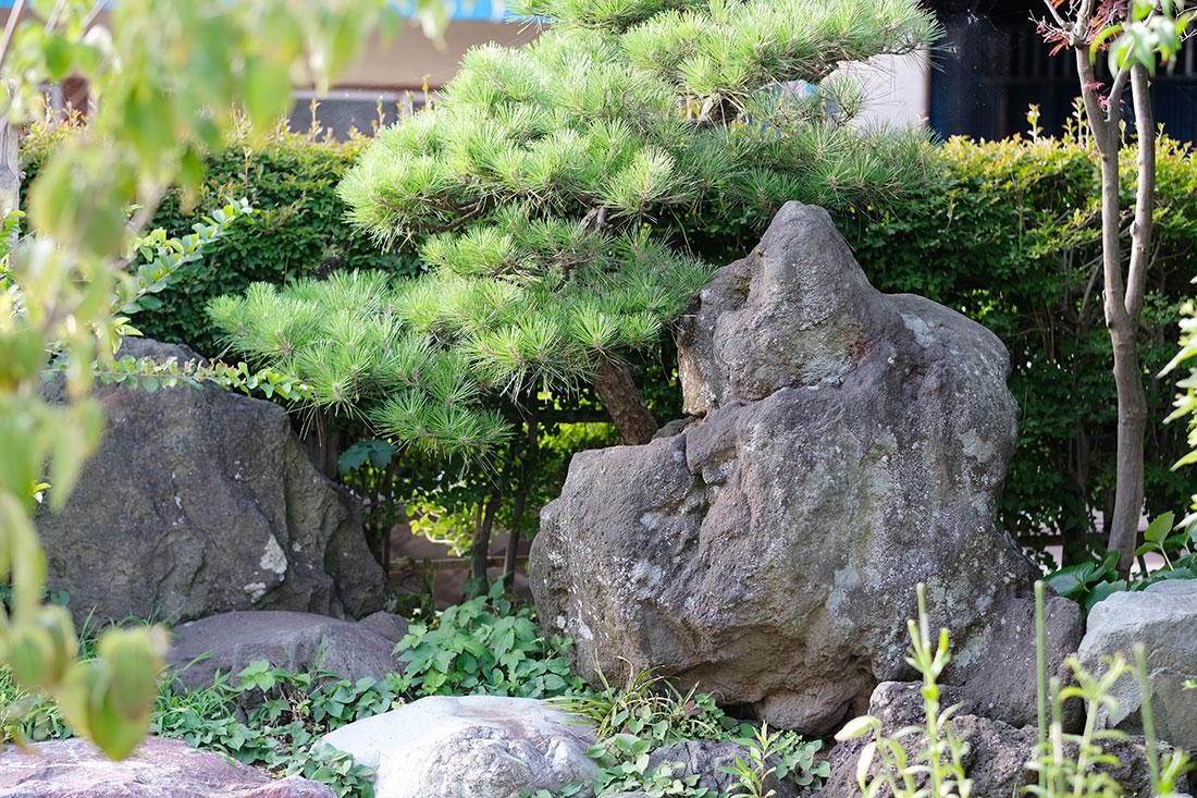 庭の植栽と岩